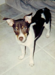 Baby Cody 2